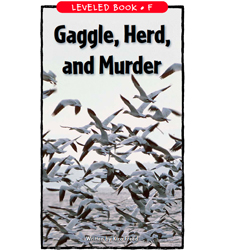 Gaggle, Herd, and Murder