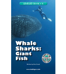 Whale Sharks: Giant Fish